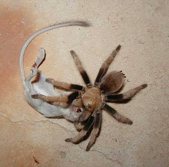 К чему беременным снятся пауки 89